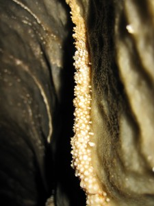 Korallgrottan_korall