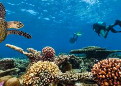Scuba divers with turtle explore beautiful coral reef. Underwater photography in Indian ocean, Maldives
