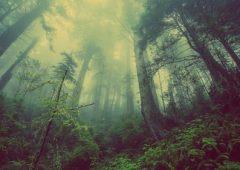 Sveriges vackraste naturreservat